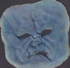 Xmen facial applicance